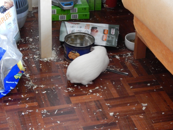 guinea_pigs_tales_spock_mess