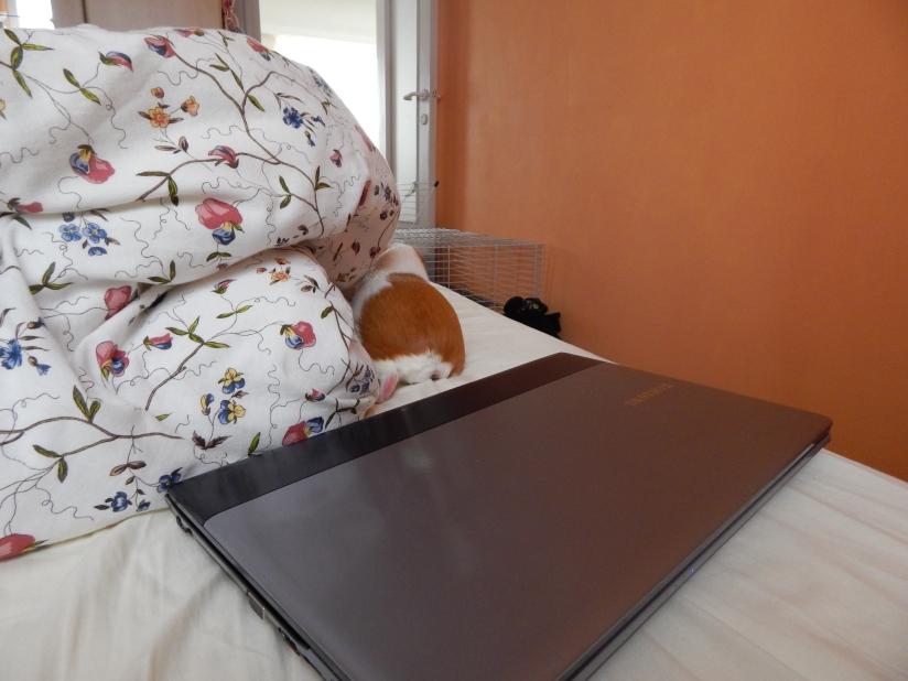 guinea_pigs_tales_kirk_laptop
