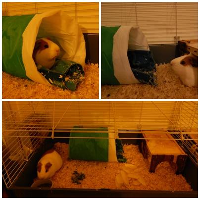 guinea_pigs_tales_kirk_tunnel