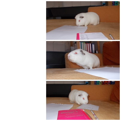 guinea_pigs_tales_spock_paper