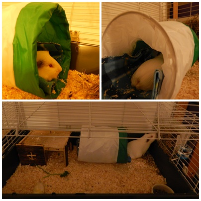 guinea_pigs_tales_spock_tunnel