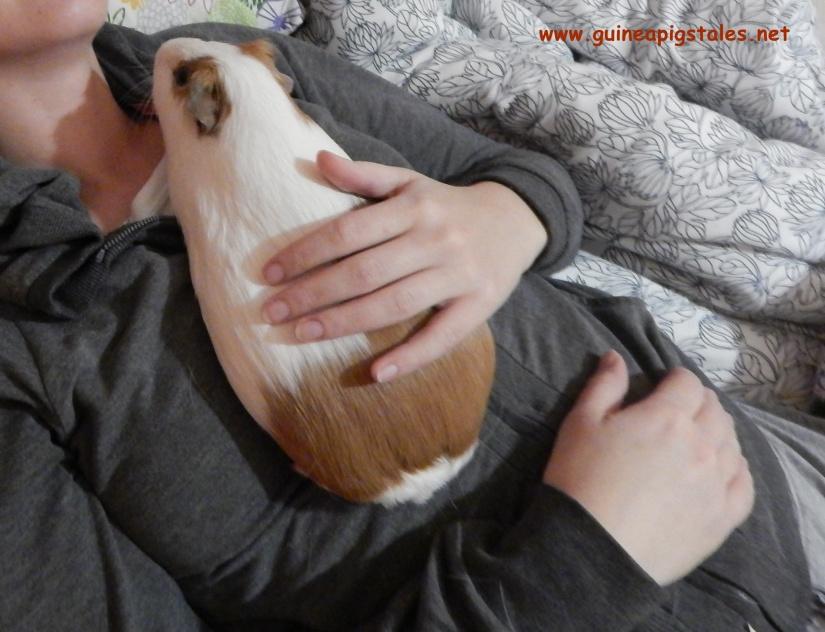 guinea_pigs_tales_kirk_pie