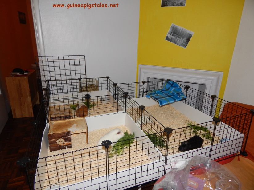 guinea_pigs_tales_the_mother_ship_1