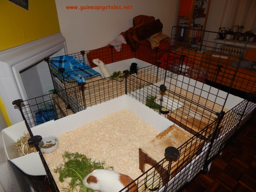 guinea_pigs_tales_the_mother_ship_2