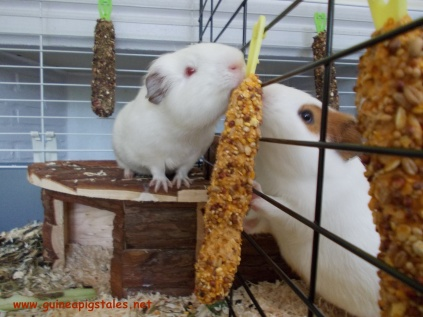 guinea_pigs_tales_cereals_bar