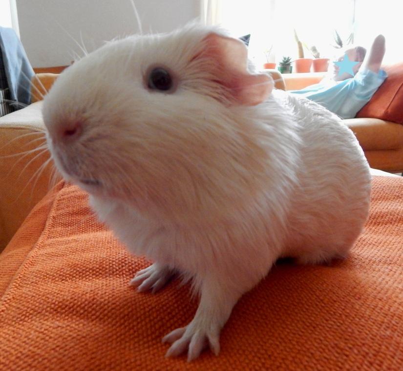 guinea_pigs_tales_Data_profile