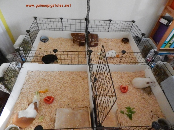 guinea_pigs_tales_mother_ship_2