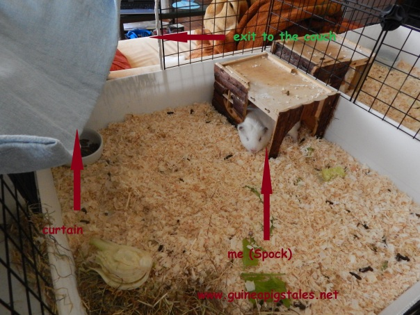 guinea_pigs_tales_improvements