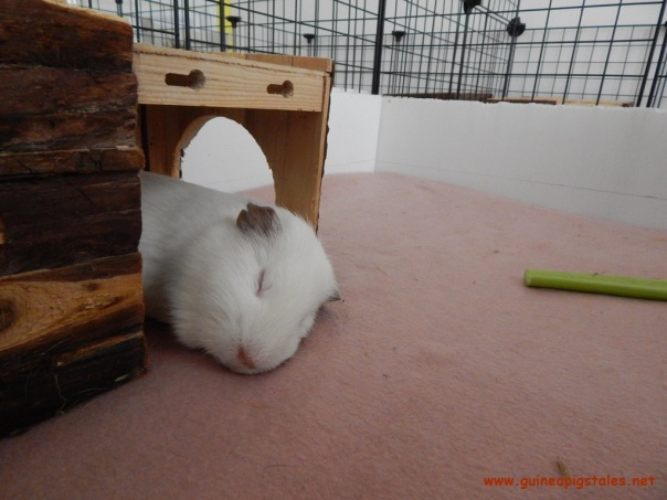spock_sleeping