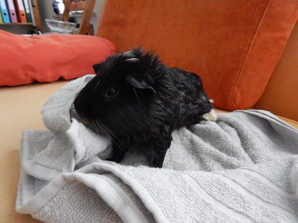 worf_bath