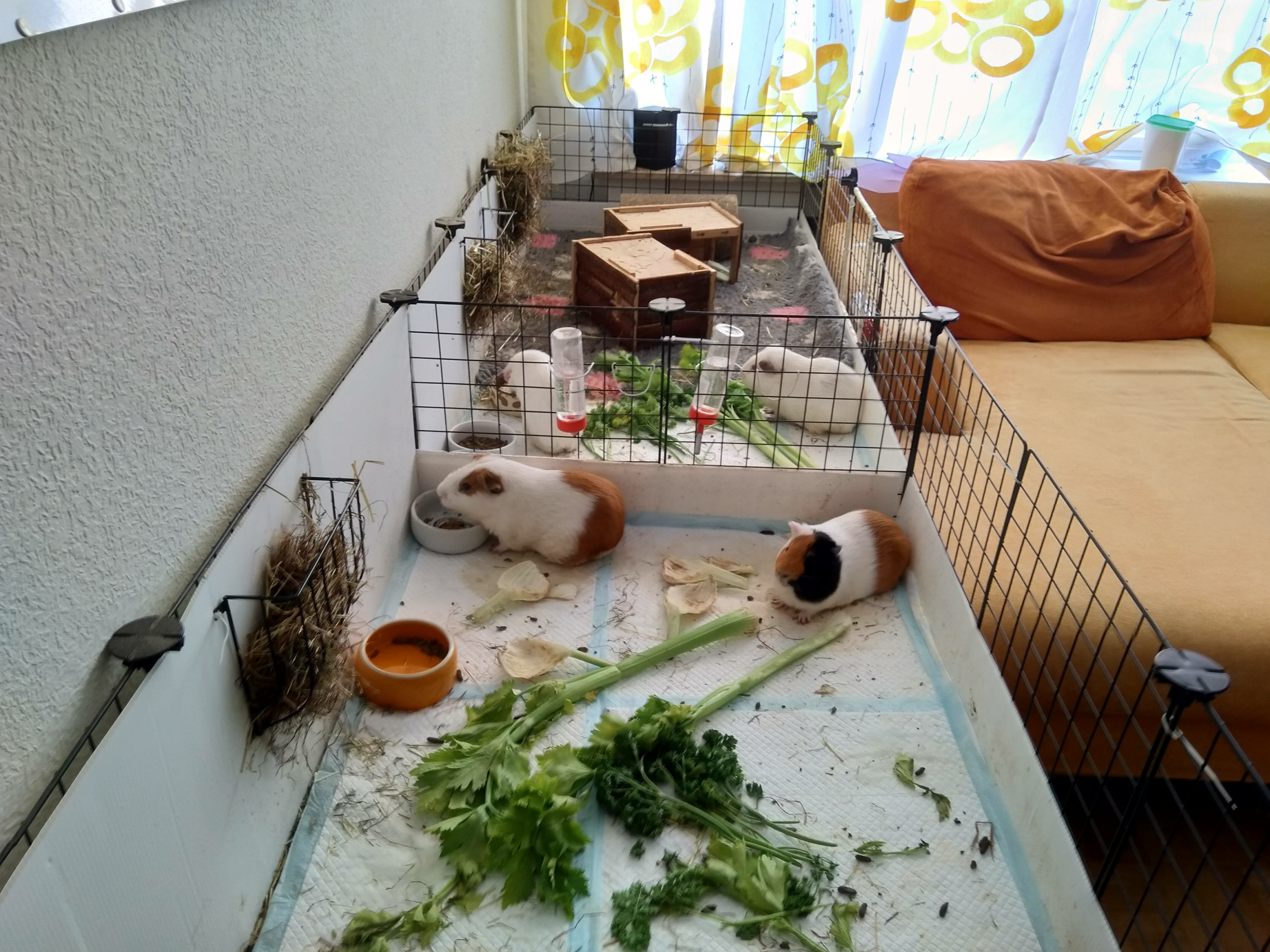 Bumblefoot and The Gang – The tales of the Guinea Pigs' Gang