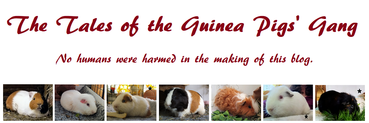 The Tales of the Guinea Pigs Gang